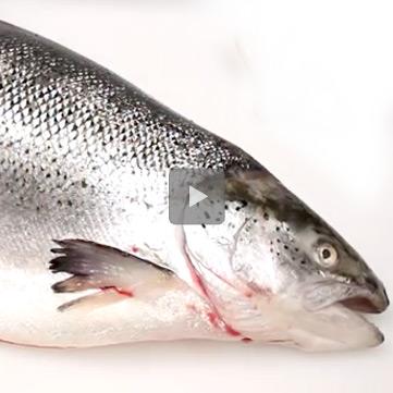Pulizia-salmone