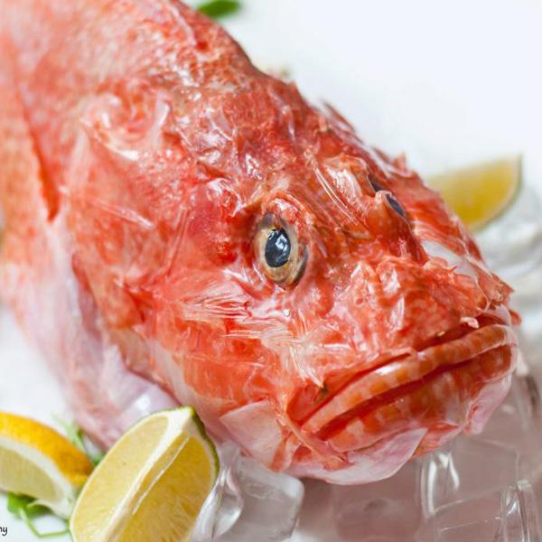 Lo scorfano dei mari italiani qualit e sapore fresco pesce for Quanto vive un pesce rosso