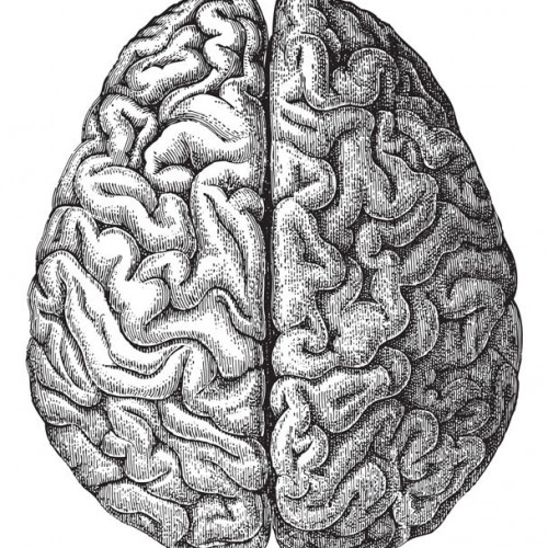 Lo dice la scienza medica: il pesce fresco fa bene al cervello!