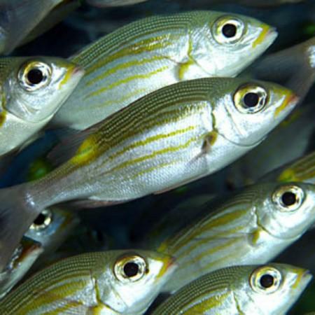 Consigli pratici su come riconosce la freschezza e come conservare il pesce