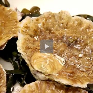 Pulizia-ostriche-belon