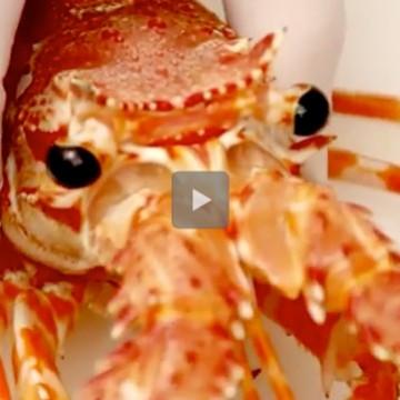 Come pulire l'aragosta