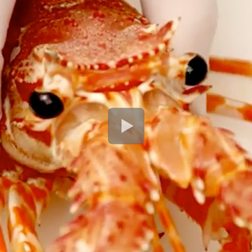 Pulizia-aragosta