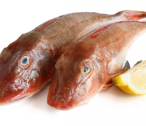Gallinella ottimo pesce di fondale