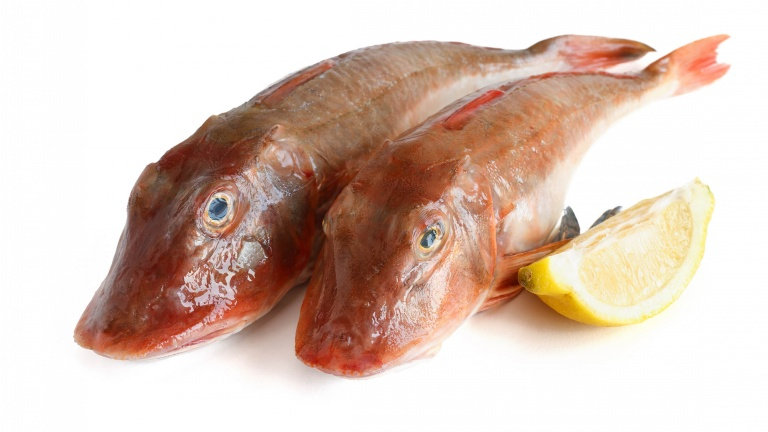 1267-gallinella-di-mare-pesce-gallinella-ricetta-rag-di-gallinella-sugo-di-gallinella