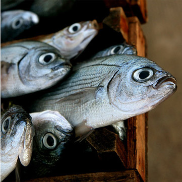 Il pesce azzurro, un amico della nostra salute