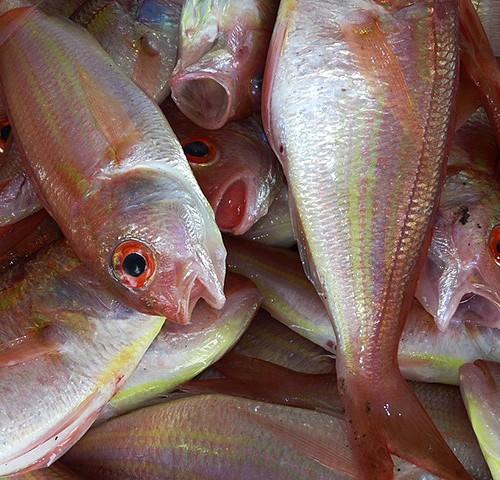 """Etichettatura pesce: Parlamento Ue chiede """"forte"""" sistema di tracciabilità per prevenire frodi"""
